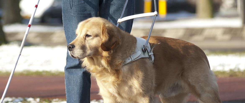 cane per ciechi