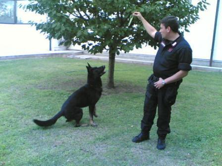 Cani Poliziotto In Italia Cani Da Lavoro Cani Utili