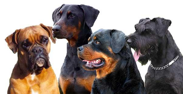 cani da difesa