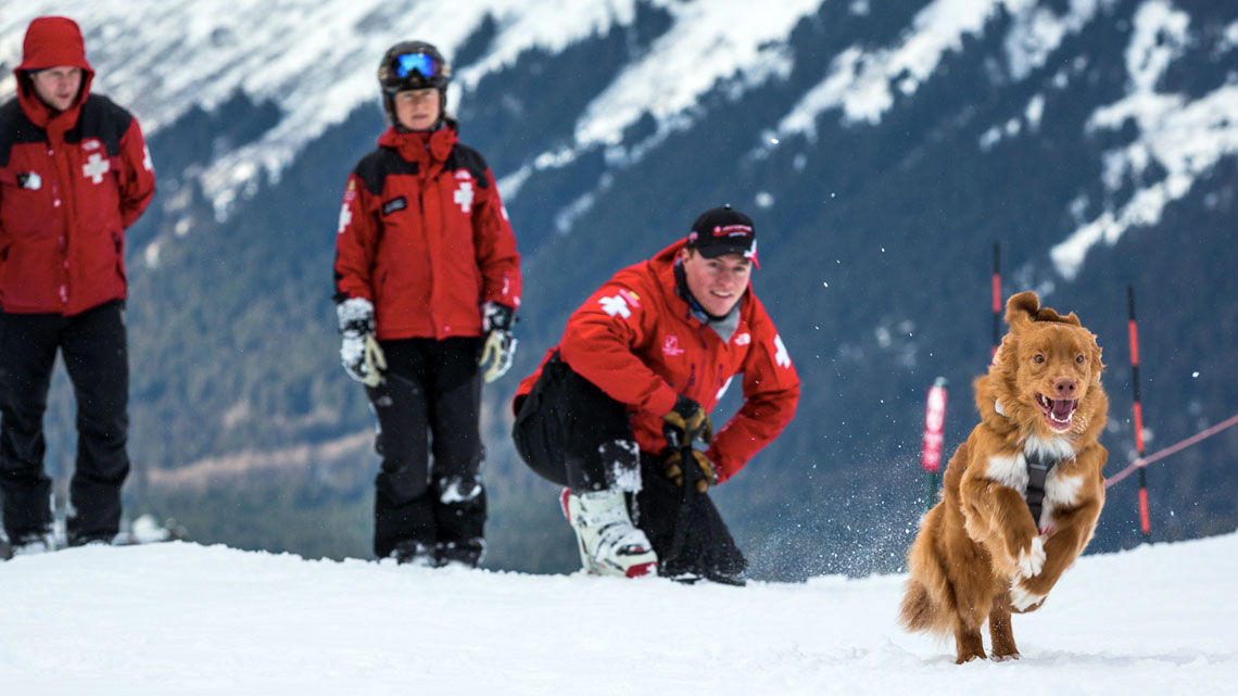 Professionisti del salvataggio ad alta quota, oggi i cani da valanga risultano più utili di qualsiasi tecnologia per rintracciare i dispersi.