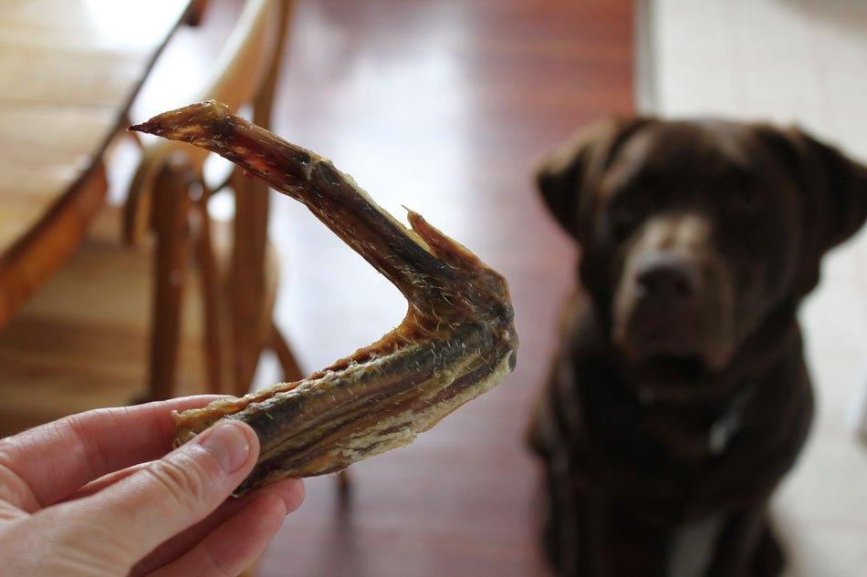 bocconcini premio per cani